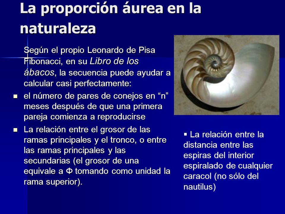 La proporción áurea en la naturaleza Según el propio Leonardo de Pisa Fibonacci, en su Libro de los ábacos, la secuencia puede ayudar a calcular casi