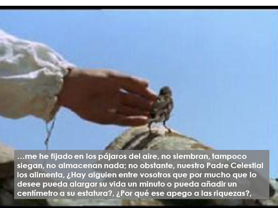 …me he fijado en los pájaros del aire, no siembran, tampoco siegan, no almacenan nada; no obstante, nuestro Padre Celestial los alimenta, ¿Hay alguien