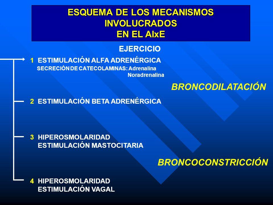 ESQUEMA DE LOS MECANISMOS INVOLUCRADOS EN EL AIxE EJERCICIO 1 ESTIMULACIÓN ALFA ADRENÉRGICA SECRECIÓN DE CATECOLAMINAS: Adrenalina Noradrenalina 2 EST