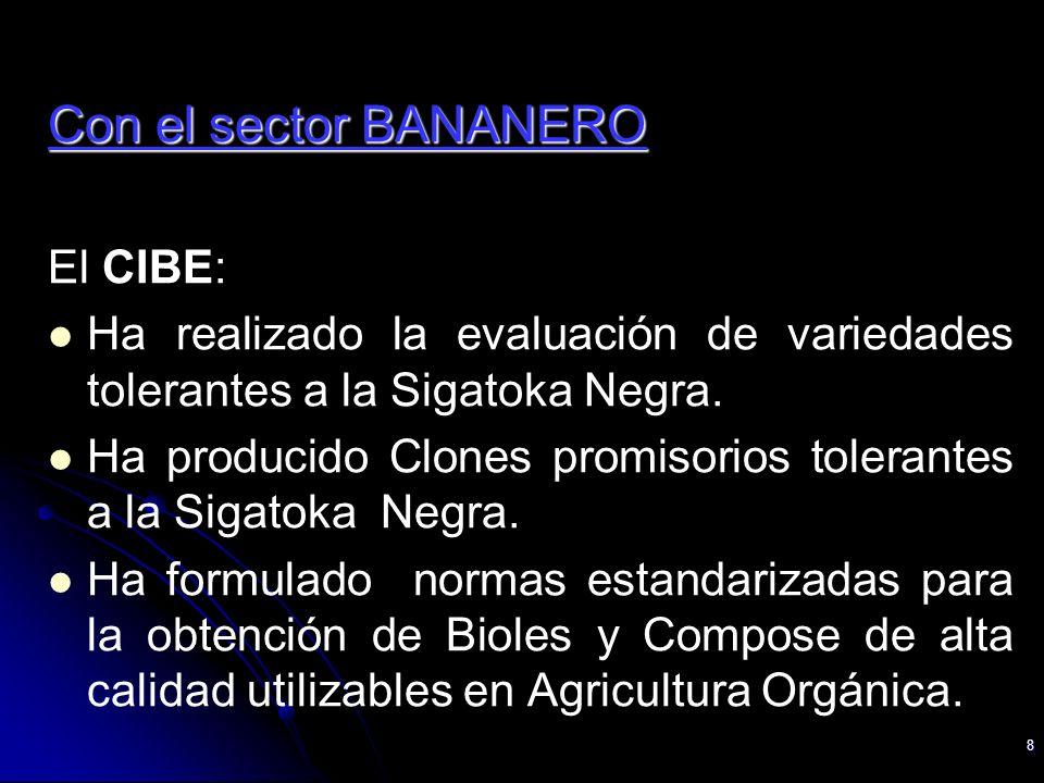 8 Con el sector BANANERO El CIBE: Ha realizado la evaluación de variedades tolerantes a la Sigatoka Negra. Ha producido Clones promisorios tolerantes