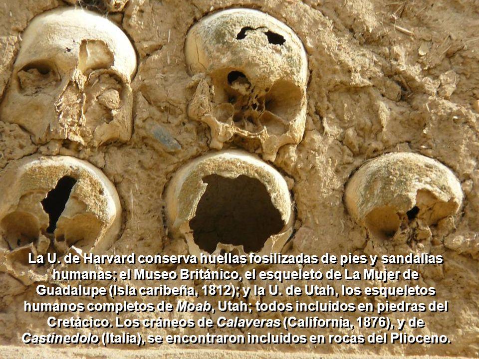 En piedra caliza del Cretácico (de hace 70 a 135 millones de años) en el cauce seco del río Paluxy, cerca de Glen Rose, Texas, aún se pueden visitar c