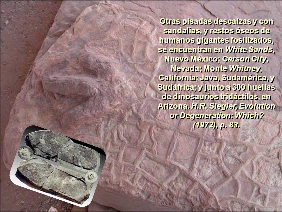 La U. de Harvard conserva huellas fosilizadas de pies y sandalias humanas; el Museo Británico, el esqueleto de La Mujer de Guadalupe (Isla caribeña, 1