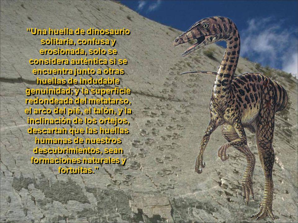 Otras pisadas descalzas y con sandalias, y restos óseos de humanos gigantes fosilizados, se encuentran en White Sands, Nuevo México; Carson City, Neva