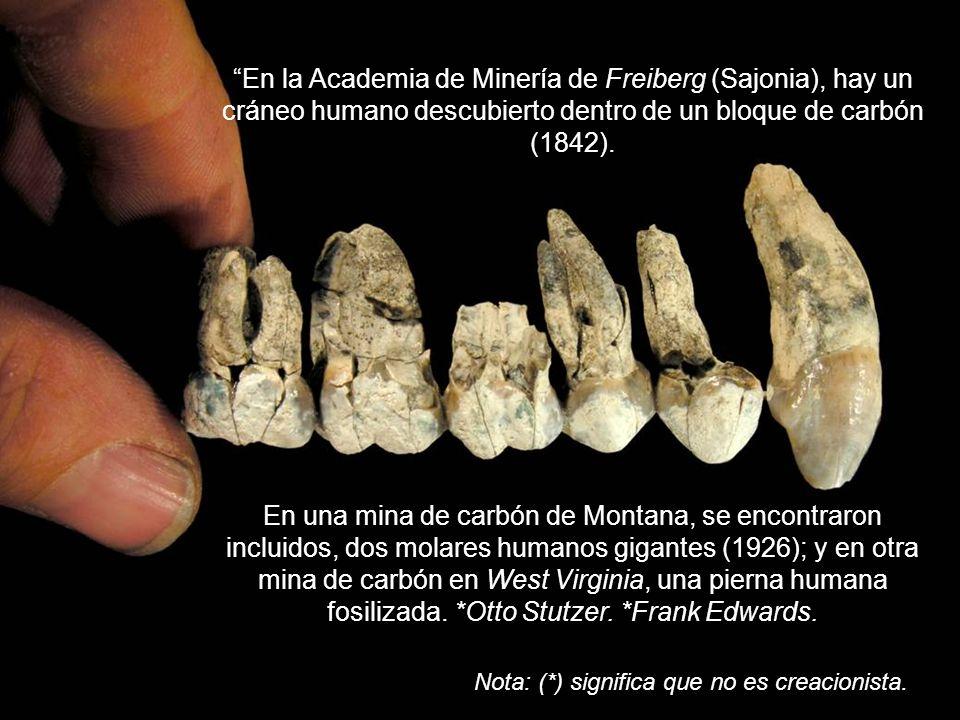 La antropóloga Louise Robbins, especializada en huellas de pies humanos, al visitar Laetoli, concluyó: A pesar de estar en un terreno tan antiguo, la