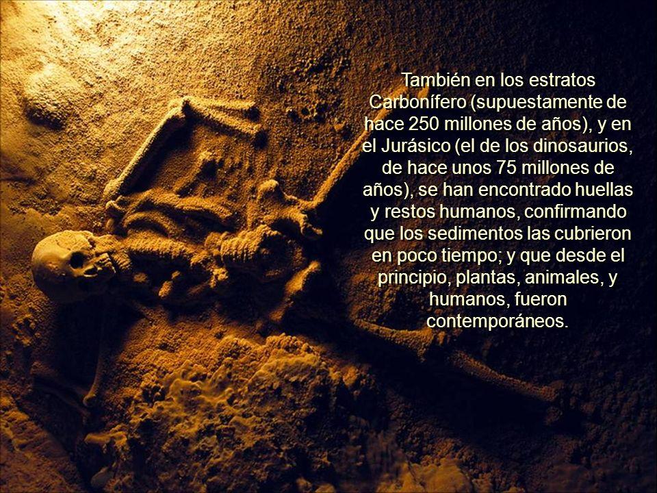 Pero William J. Meister, Sr., en 1968, en una escarpada montaña de Antelope Springs, Utah, encontró (en rocas del Cámbrico) una huella de pié humano p