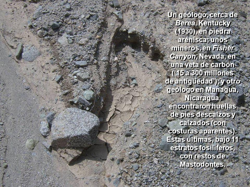 También en los estratos Carbonífero (supuestamente de hace 250 millones de años), y en el Jurásico (el de los dinosaurios, de hace unos 75 millones de