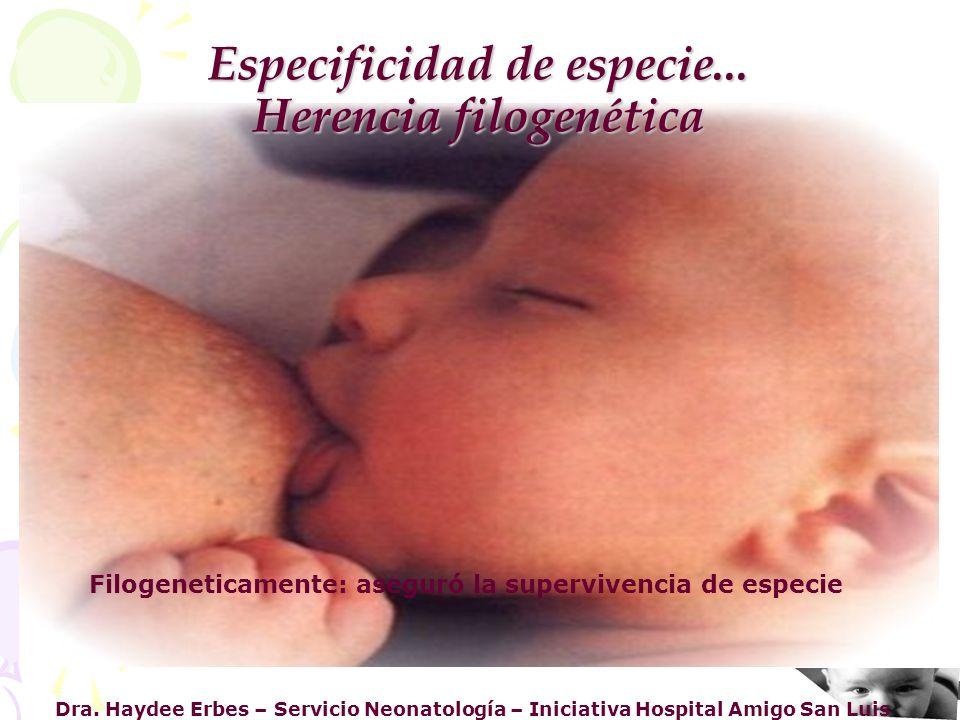 Dra. Haydee Erbes – Servicio Neonatología – Iniciativa Hospital Amigo San Luis Especificidad de especie... Herencia filogenética Filogeneticamente: as