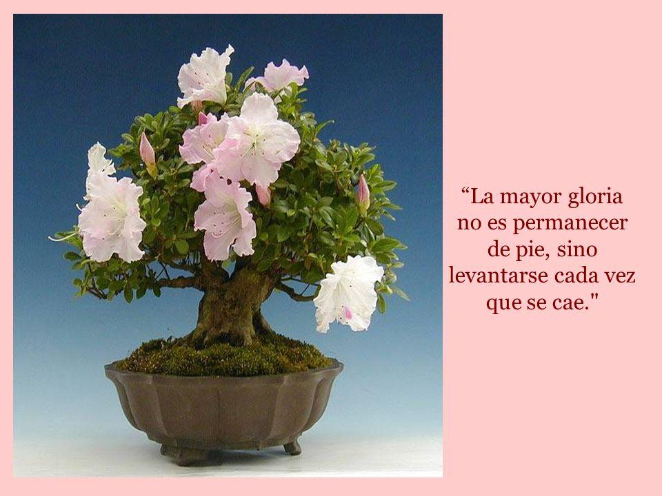 Hay personas que lloran al saber que las rosas tienen espinas.