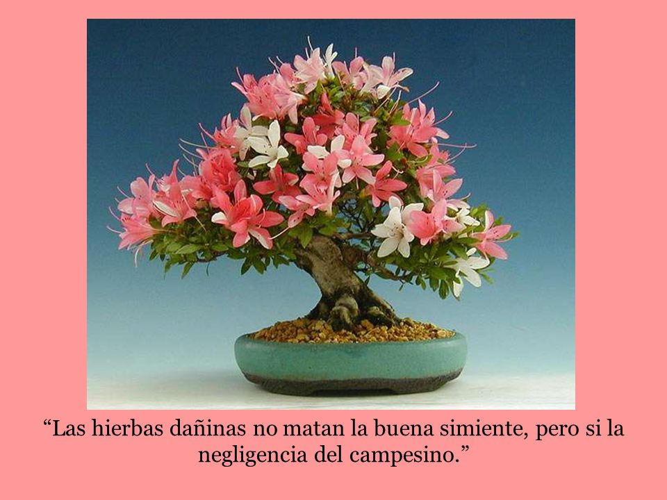 Las hierbas dañinas no matan la buena simiente, pero si la negligencia del campesino.