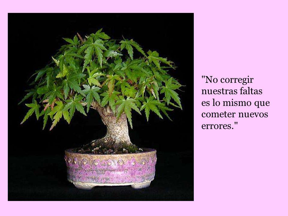 No corregir nuestras faltas es lo mismo que cometer nuevos errores.