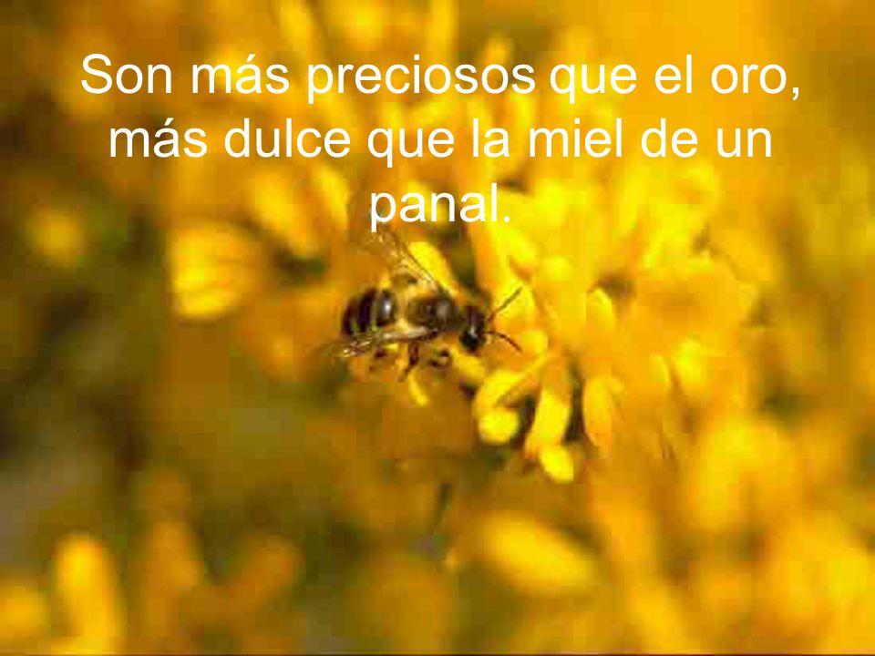 Tus mandamientos son enteramente justos y razonables, Señor, Son más preciosos que el oro, más dulce que la miel de un panal.
