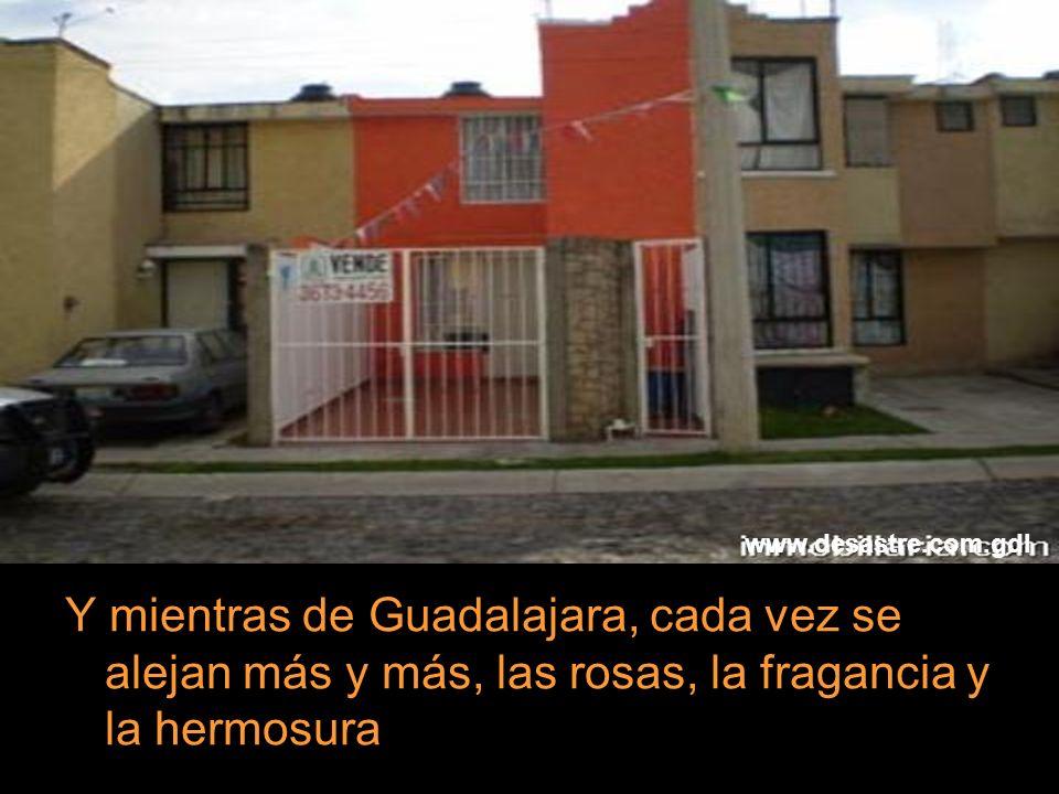 Y mientras de Guadalajara, cada vez se alejan más y más, las rosas, la fragancia y la hermosura www.desastre.com.gdl
