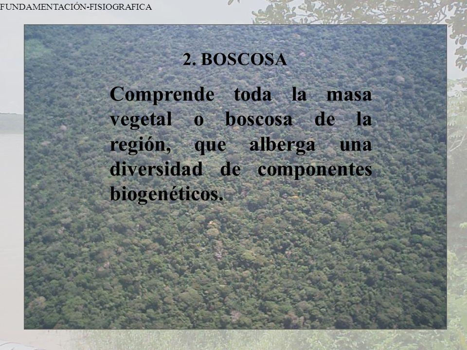 FUNDAMENTACIÓN-FISIOGRAFICA 2. BOSCOSA Comprende toda la masa vegetal o boscosa de la región, que alberga una diversidad de componentes biogenéticos.