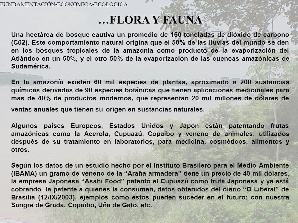 FUNDAMENTACIÓN-ECONOMICA-ECOLOGICA …FLORA Y FAUNA Una hectárea de bosque cautiva un promedio de 160 toneladas de dióxido de carbono (C02). Este compor