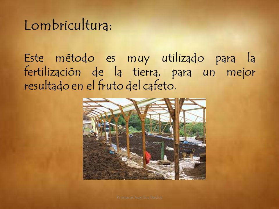 Lombricultura: Este método es muy utilizado para la fertilización de la tierra, para un mejor resultado en el fruto del cafeto. Primeros Auxilios Basi