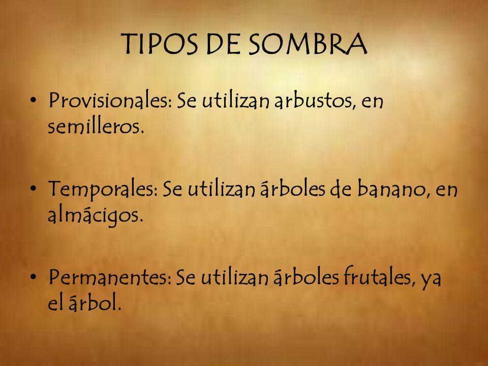 TIPOS DE SOMBRA Provisionales: Se utilizan arbustos, en semilleros. Temporales: Se utilizan árboles de banano, en almácigos. Permanentes: Se utilizan