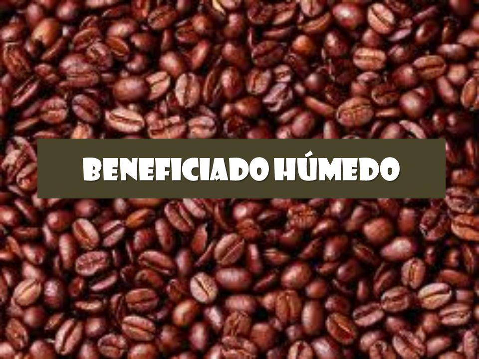 BENEFICIADO HÚMEDO