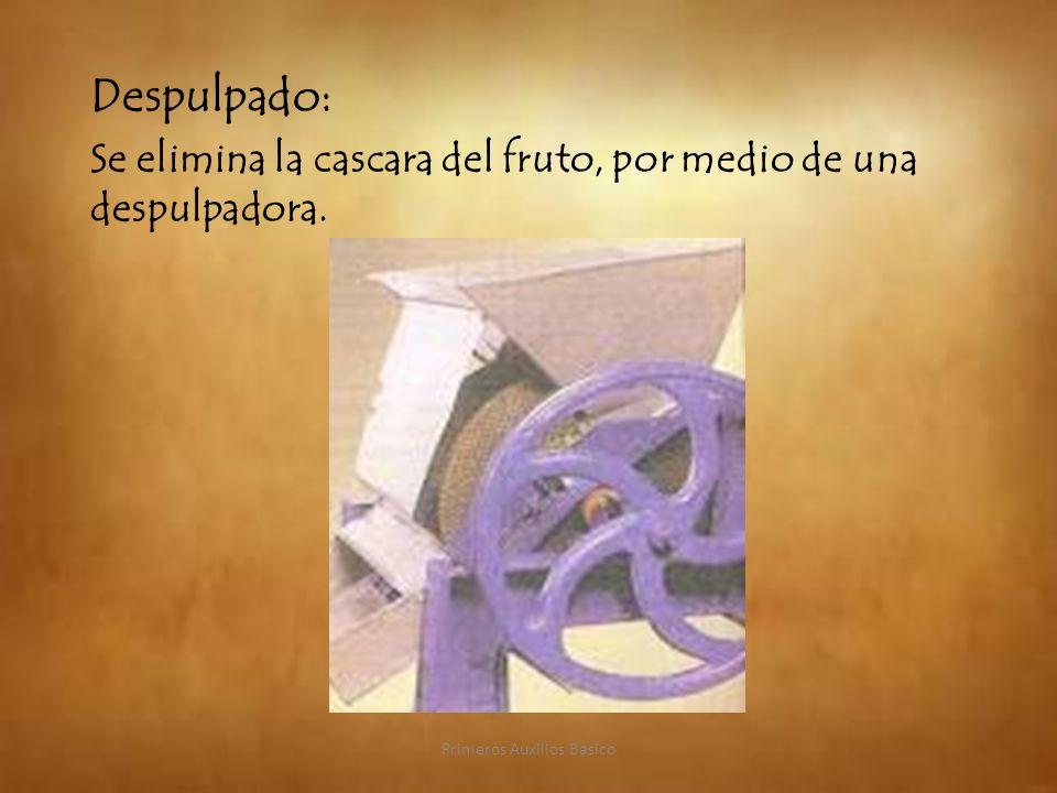 Despulpado: Se elimina la cascara del fruto, por medio de una despulpadora. Primeros Auxilios Basico
