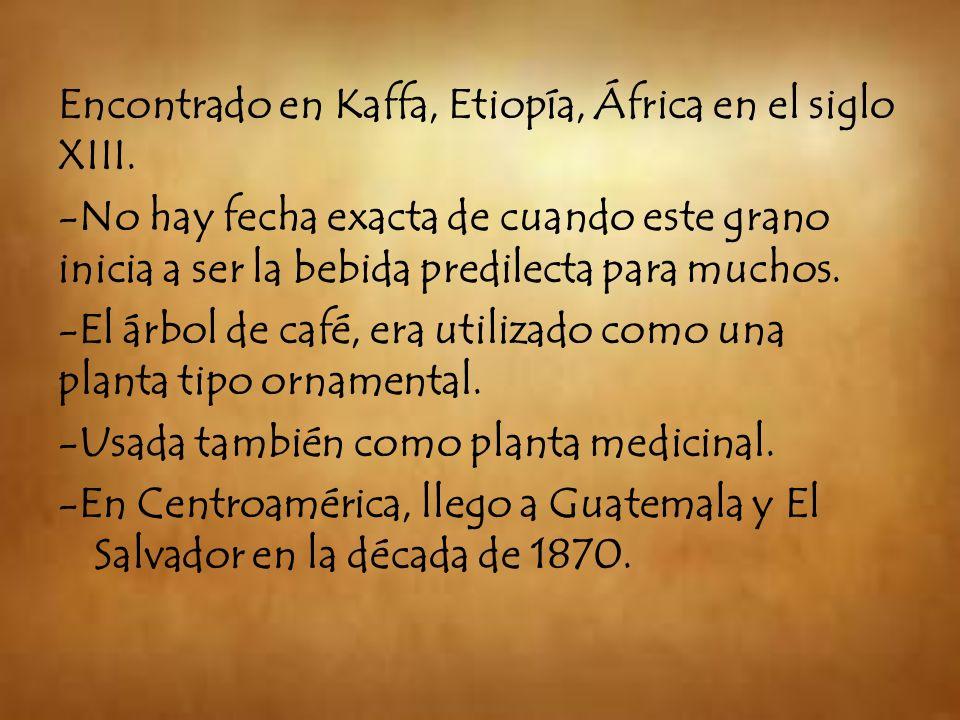 Encontrado en Kaffa, Etiopía, África en el siglo XIII. -No hay fecha exacta de cuando este grano inicia a ser la bebida predilecta para muchos. -El ár