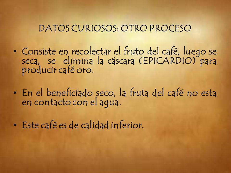 DATOS CURIOSOS: OTRO PROCESO Consiste en recolectar el fruto del café, luego se seca, se elimina la cáscara (EPICARDIO) para producir café oro. En el