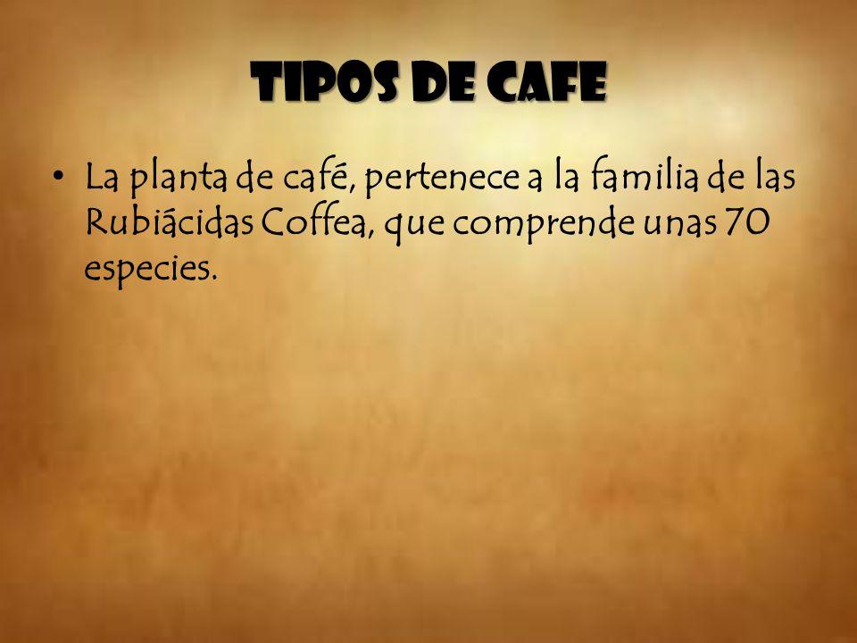 Cascara del café: Esta puede servir como abono para las mismas plantaciones de café.