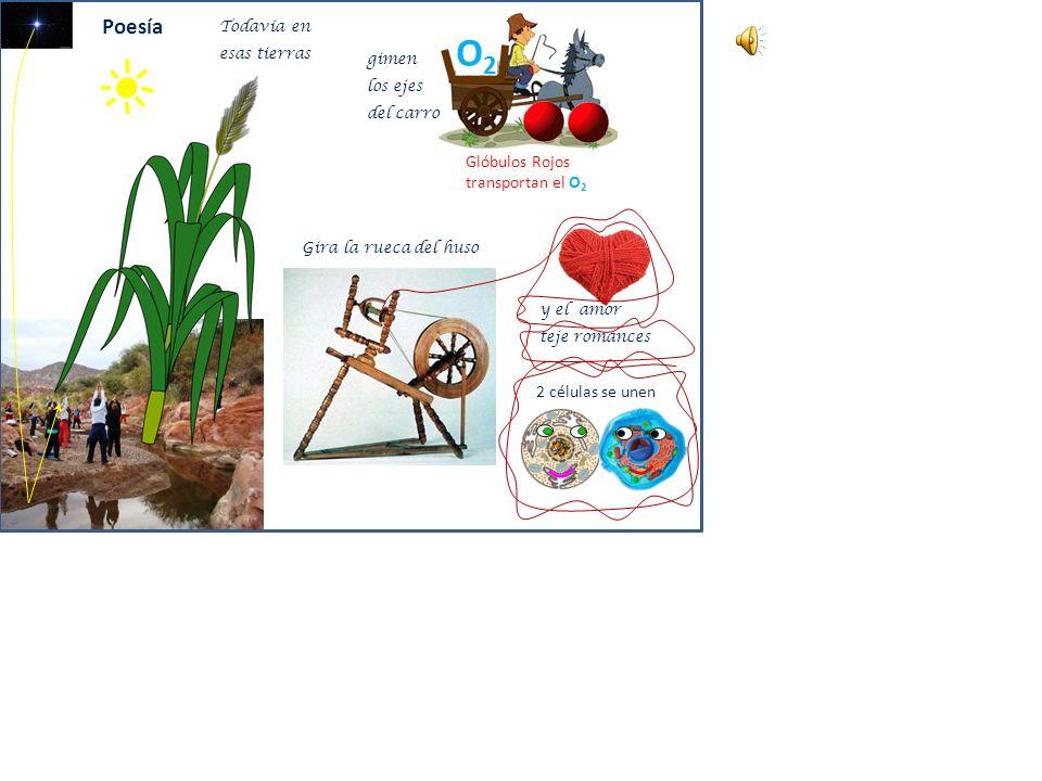 O2O2 Agua H 2 O H2OH2O CO 2 = + O2 O2 ????? H2OH2O C Carbo Hidrato 2 C O Carbohidrato! ? Energía Cuida las Plantitas! Fotosíntesis