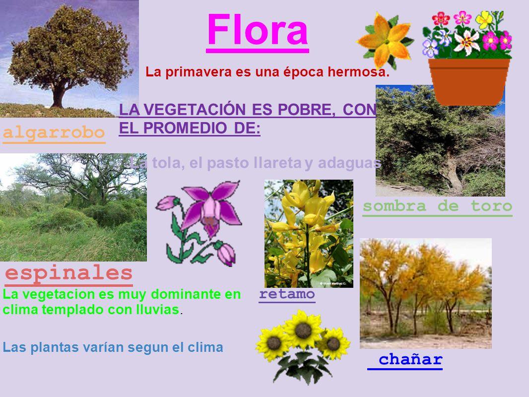 Flora espinales algarrobo sombra de toro La primavera es una época hermosa.