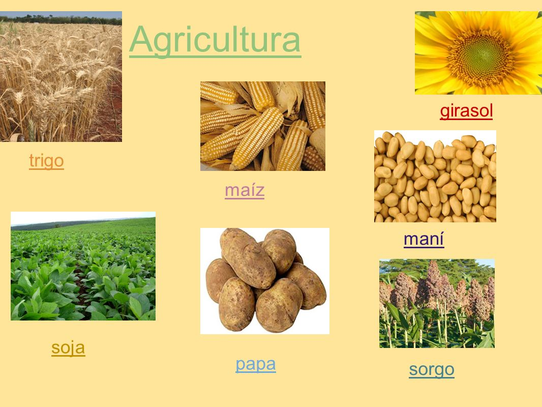 Agricultura trigo maíz girasol soja papa maní sorgo
