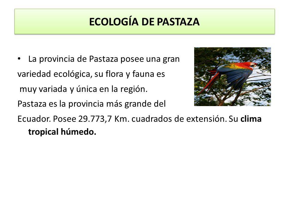 ECOLOGÍA DE PASTAZA La provincia de Pastaza posee una gran variedad ecológica, su flora y fauna es muy variada y única en la región. Pastaza es la pro