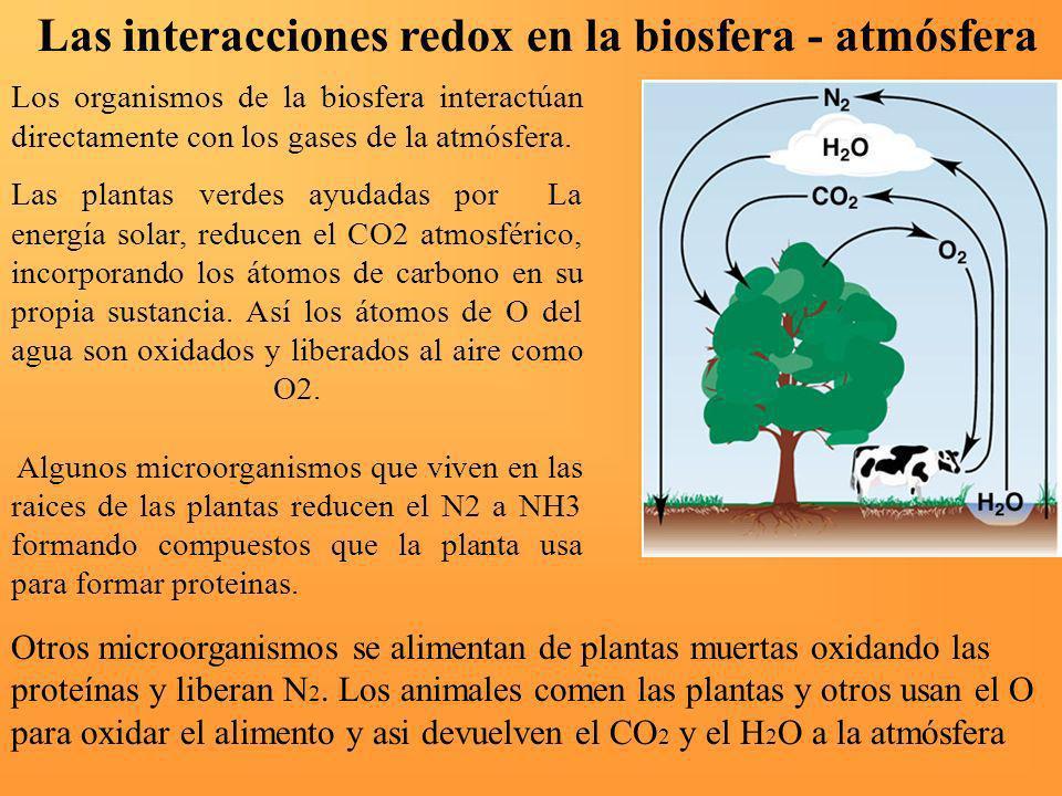Las interacciones redox en la biosfera - atmósfera Los organismos de la biosfera interactúan directamente con los gases de la atmósfera. Las plantas v