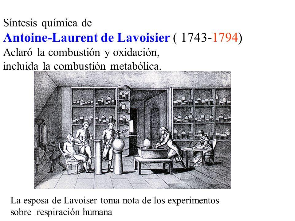 Síntesis química de Antoine-Laurent de Lavoisier ( 1743-1794) Aclaró la combustión y oxidación, incluida la combustión metabólica. La esposa de Lavois