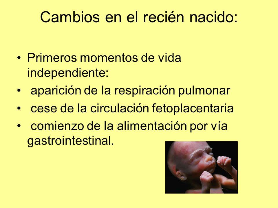 Cambios en el recién nacido: Primeros momentos de vida independiente: aparición de la respiración pulmonar cese de la circulación fetoplacentaria comienzo de la alimentación por vía gastrointestinal.
