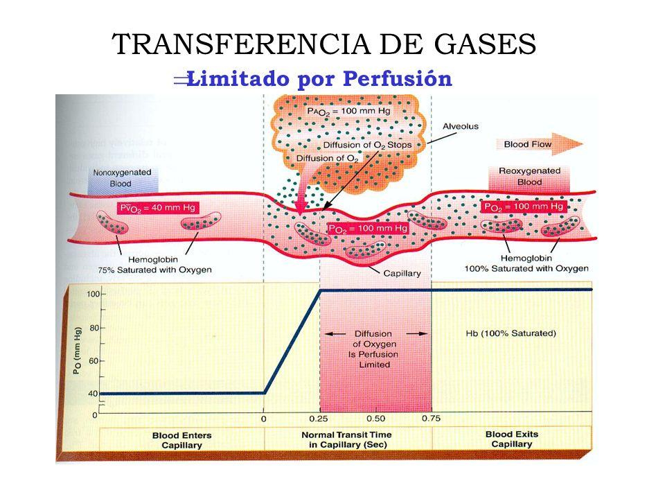 Limitado por Perfusión TRANSFERENCIA DE GASES
