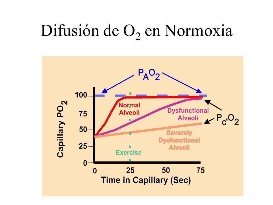 Difusión de O 2 en Normoxia