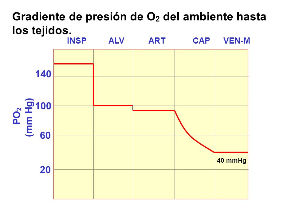 20 60 100 140 INSP ALV ART CAP VEN-M Gradiente de presión de O 2 del ambiente hasta los tejidos.