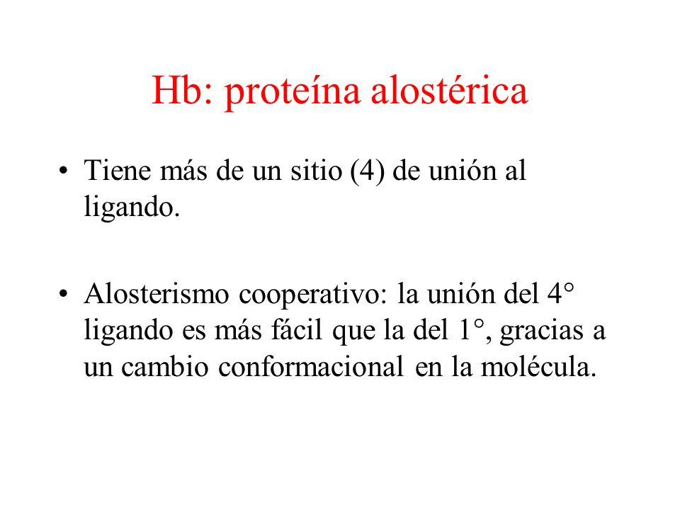 Hb: proteína alostérica Tiene más de un sitio (4) de unión al ligando.