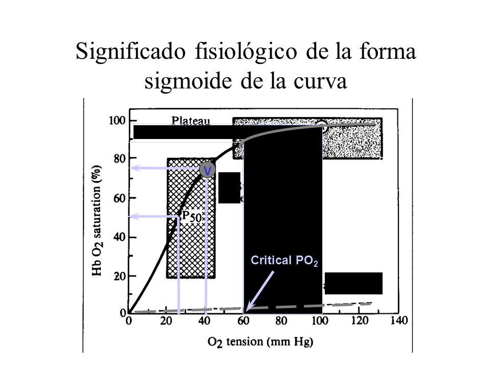 Significado fisiológico de la forma sigmoide de la curva Critical PO 2 V