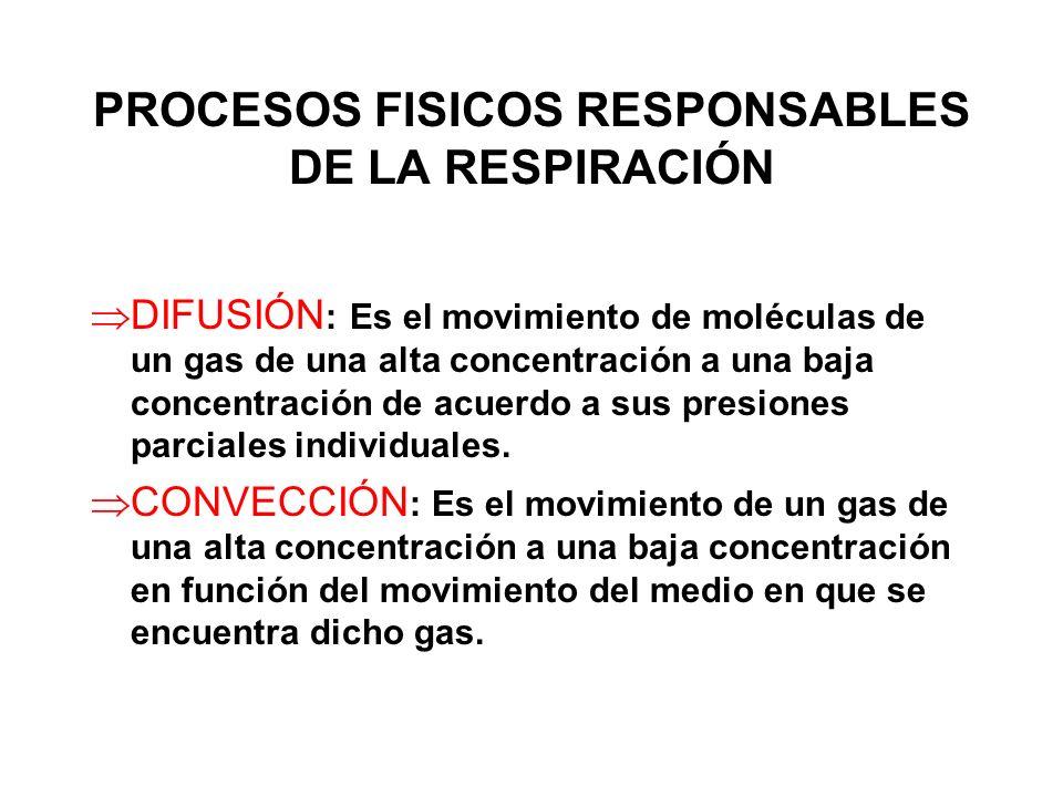 PROCESOS FISICOS RESPONSABLES DE LA RESPIRACIÓN DIFUSIÓN : Es el movimiento de moléculas de un gas de una alta concentración a una baja concentración de acuerdo a sus presiones parciales individuales.