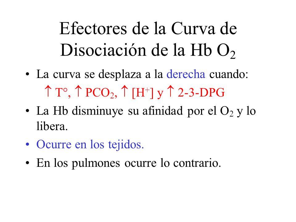 Efectores de la Curva de Disociación de la Hb O 2 La curva se desplaza a la derecha cuando: T°, PCO 2, [H + ] y 2-3-DPG La Hb disminuye su afinidad por el O 2 y lo libera.