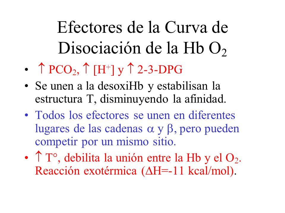 Efectores de la Curva de Disociación de la Hb O 2 PCO 2, [H + ] y 2-3-DPG Se unen a la desoxiHb y estabilisan la estructura T, disminuyendo la afinidad.