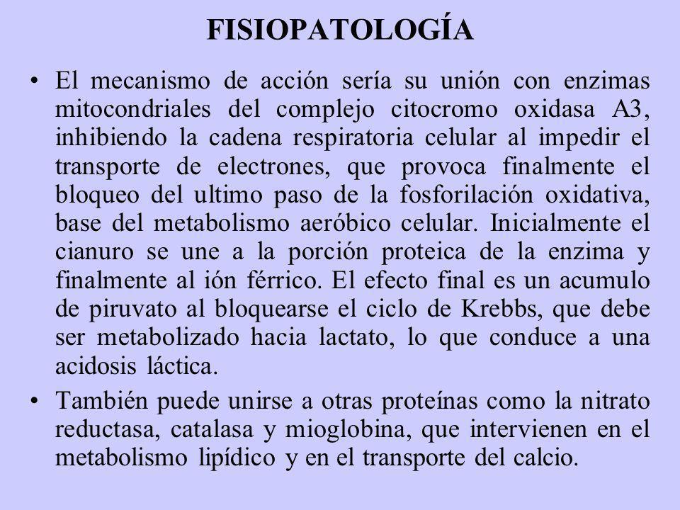 FISIOPATOLOGÍA El mecanismo de acción sería su unión con enzimas mitocondriales del complejo citocromo oxidasa A3, inhibiendo la cadena respiratoria c