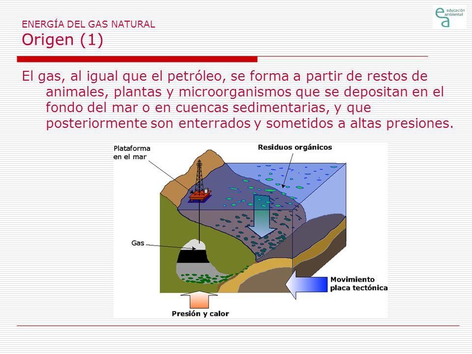 ENERGÍA DEL GAS NATURAL Origen (1) El gas, al igual que el petróleo, se forma a partir de restos de animales, plantas y microorganismos que se deposit