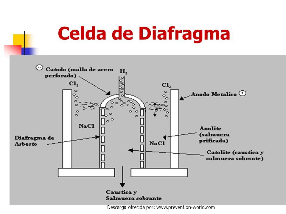 Autor: Rosate Descarga ofrecida por: www.prevention-world.com Fabricación del Cloro Procesos de Electrólisis Celda de Diafrágma Celda de Mercurio Celd