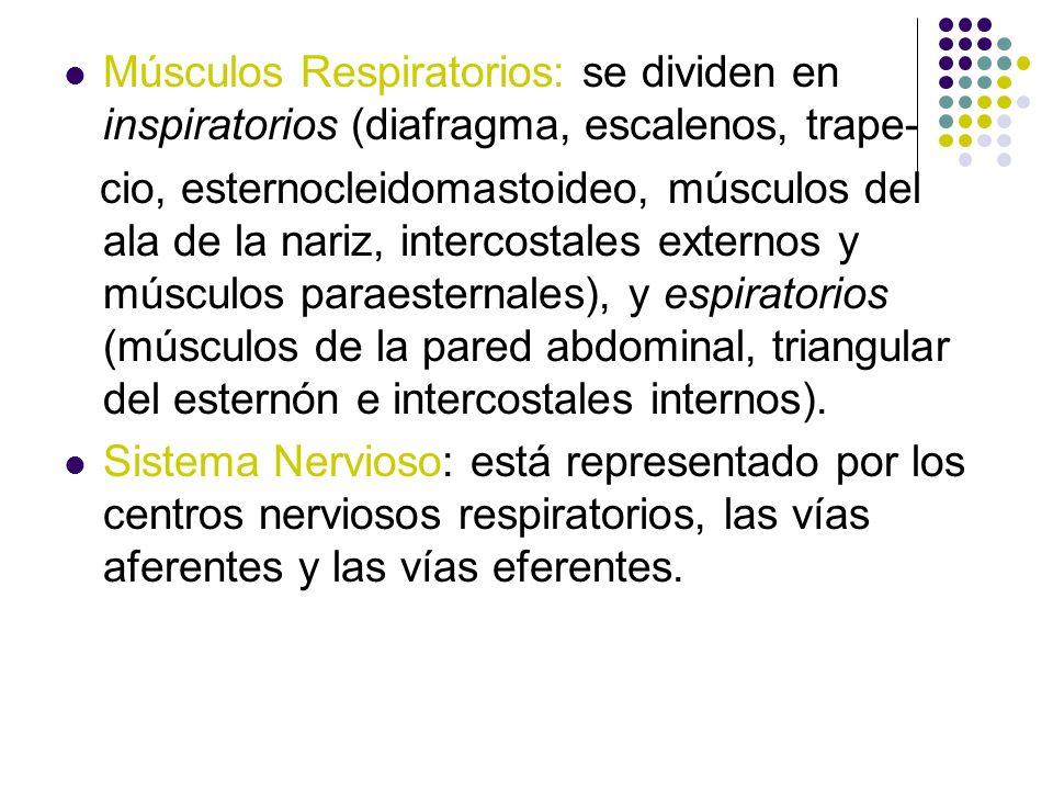 Músculos Respiratorios: se dividen en inspiratorios (diafragma, escalenos, trape- cio, esternocleidomastoideo, músculos del ala de la nariz, intercost