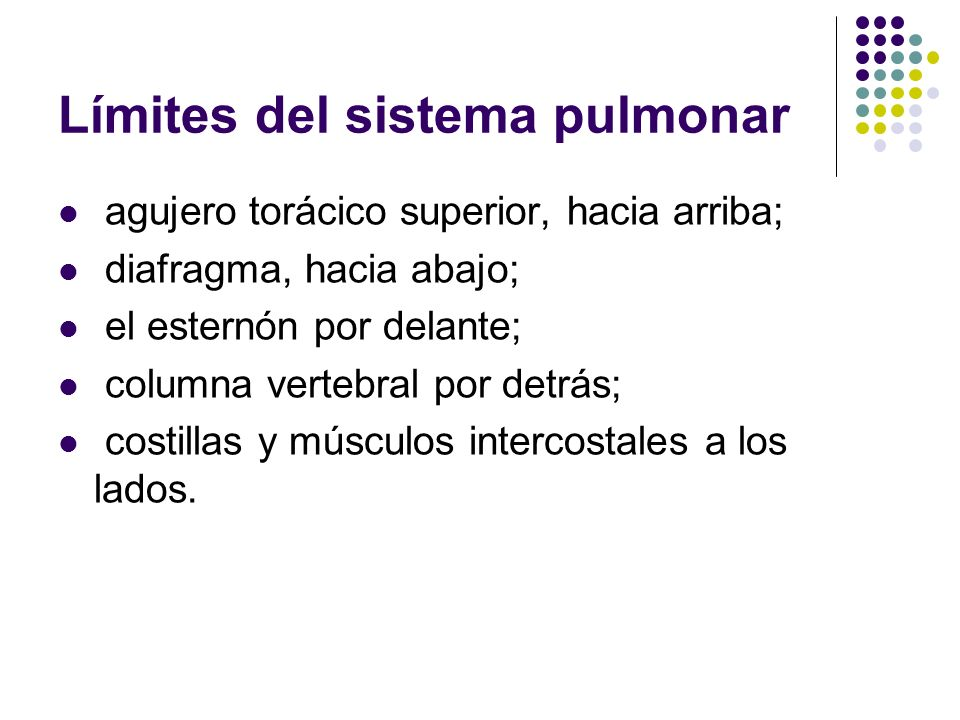 Límites del sistema pulmonar agujero torácico superior, hacia arriba; diafragma, hacia abajo; el esternón por delante; columna vertebral por detrás; c