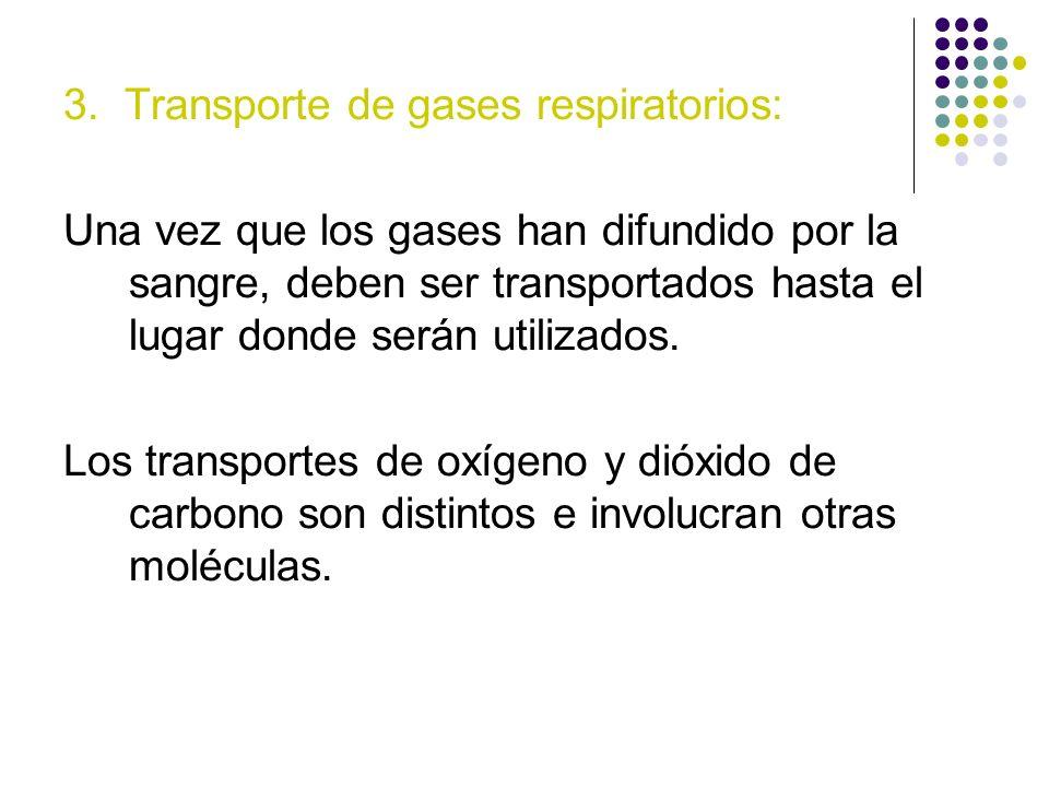 3. Transporte de gases respiratorios: Una vez que los gases han difundido por la sangre, deben ser transportados hasta el lugar donde serán utilizados