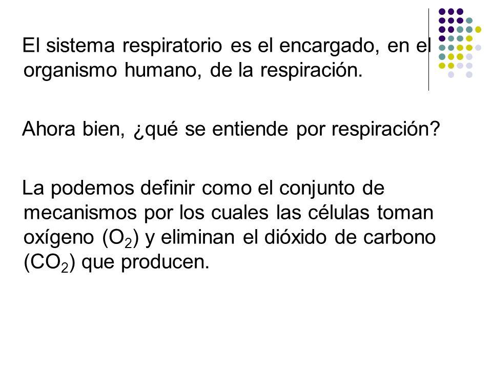 El sistema respiratorio es el encargado, en el organismo humano, de la respiración. Ahora bien, ¿qué se entiende por respiración? La podemos definir c