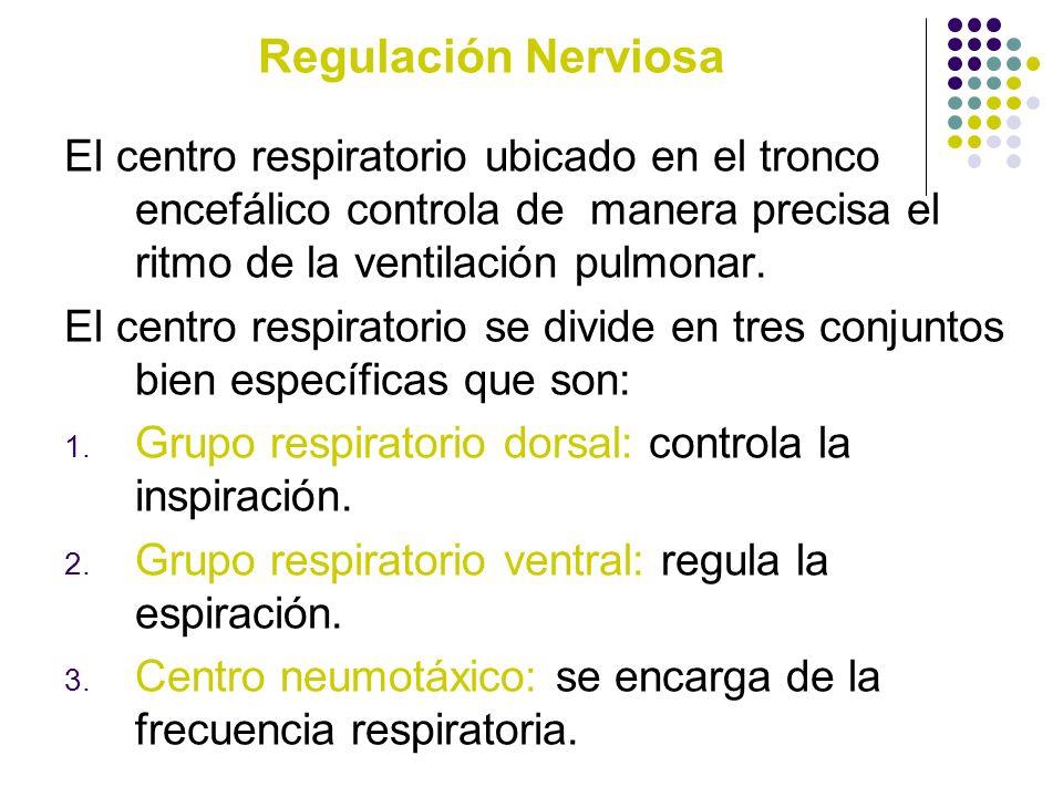 Regulación Nerviosa El centro respiratorio ubicado en el tronco encefálico controla de manera precisa el ritmo de la ventilación pulmonar. El centro r