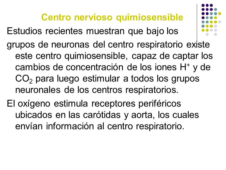 Centro nervioso quimiosensible Estudios recientes muestran que bajo los grupos de neuronas del centro respiratorio existe este centro quimiosensible,