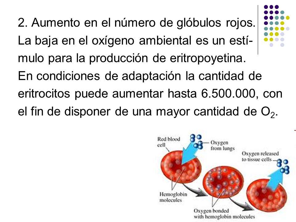 2. Aumento en el número de glóbulos rojos. La baja en el oxígeno ambiental es un estí- mulo para la producción de eritropoyetina. En condiciones de ad